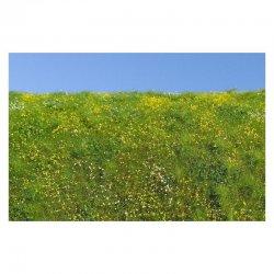 Blooming meadow - spring
